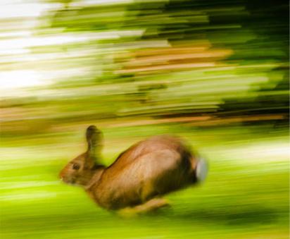 conejo-corriendo