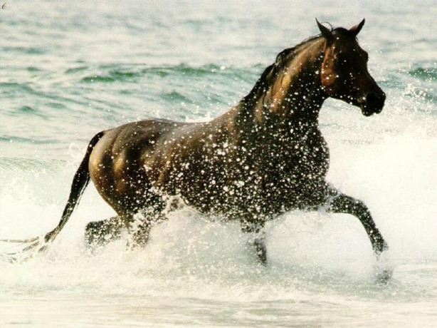 chevaux-b91204